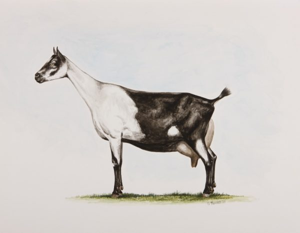 Dairy Goats – The AMERICAN GOAT FEDERATION